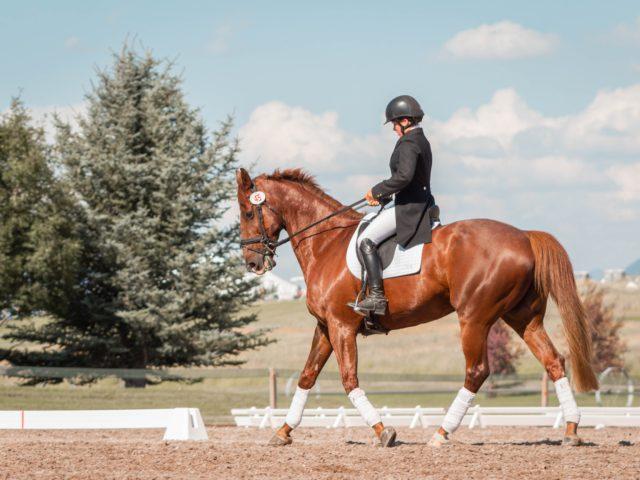 乗馬は楽しみながらトレーニングできる良い方法